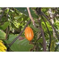 Ti'Délice Chocolat Péyi Gourmand'Îles